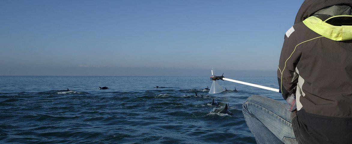 Une association qui travaille à la connaissance des mammifères marins en France